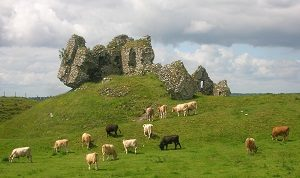 Clonmacnoise_castle_and_cattle