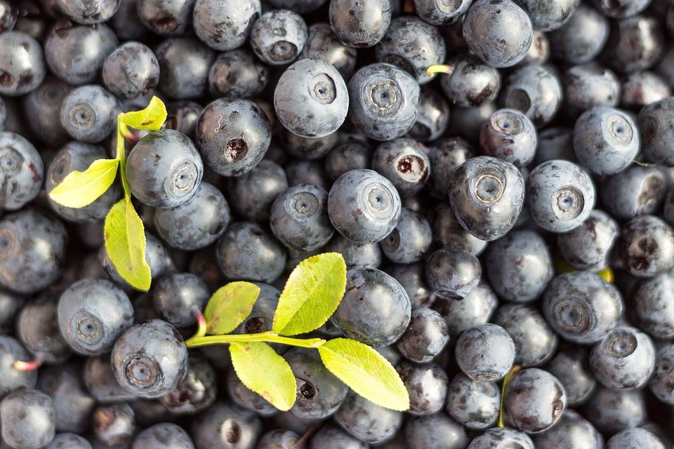 blueberry-1533364_960_720